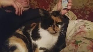 Кошачий разговорник Как позвать кошку