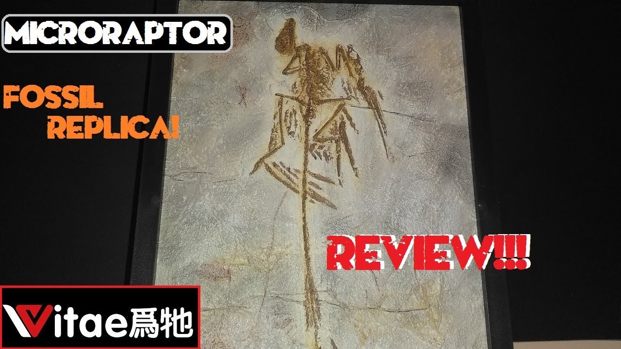 Vitae Microraptor Gui Fossil Replica Review!!!