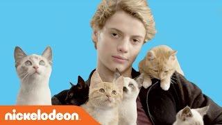 Rufus 2: jace norman loves kittens   nick