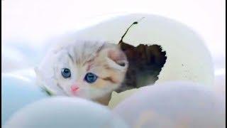 Tik Tok Cute Pet Complication