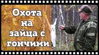 Охота на зайца с русскими гончими. Открытие сезона 2017.