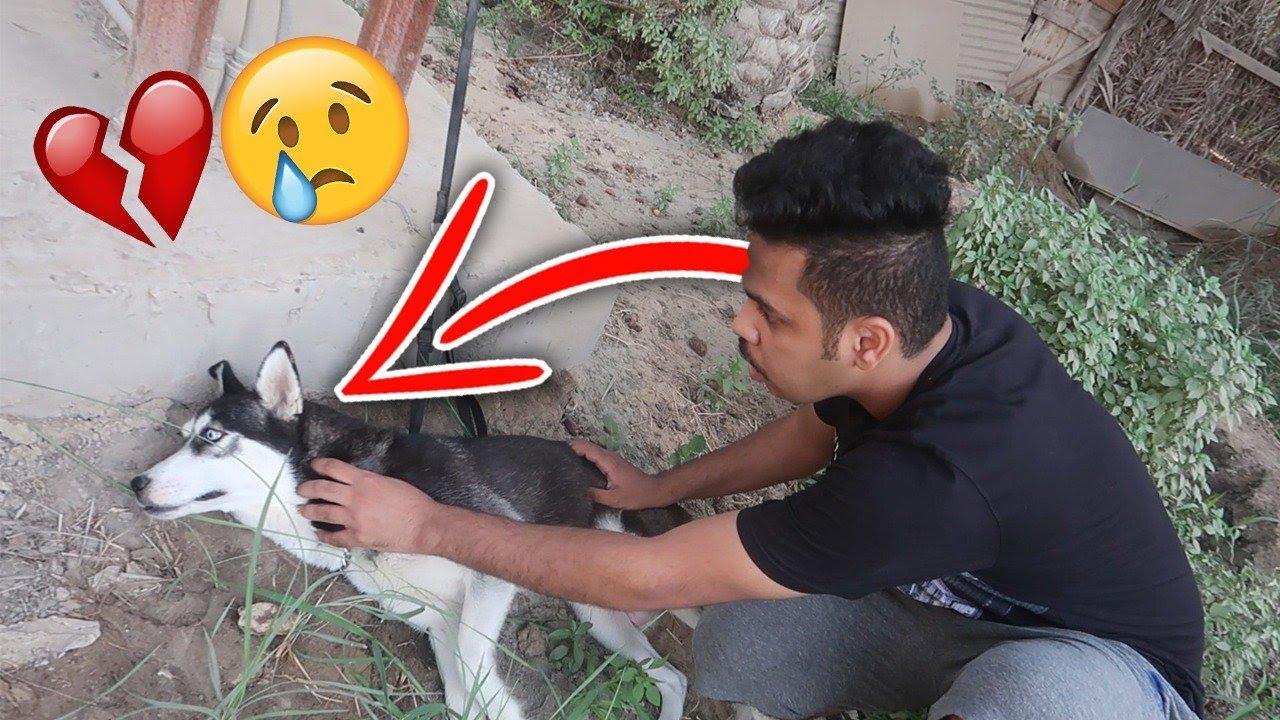 اخيرا حصلت كلبتي لوسي وهنا كانت الصدمة !!💔