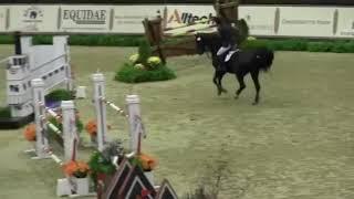 Relevantus (Zorro) - Eurequine LLC Stallion