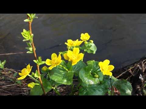Пение Птиц. Весна. Река. Цветы. Full HD
