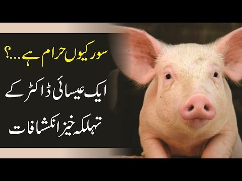 why is pig haram in islam Here is the things that are forbidden by islam list of things muslims consider forbidden (haram) jews were turned into pigs and apes when they defied.