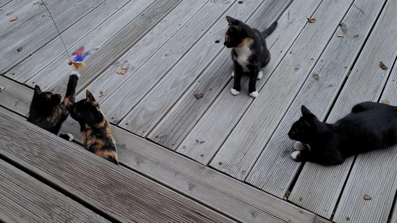 8코기네 4냥이 낚기/Cat fishing.