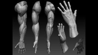 Анатомия  мышцы верхних конечностей(, 2016-10-08T22:25:26.000Z)