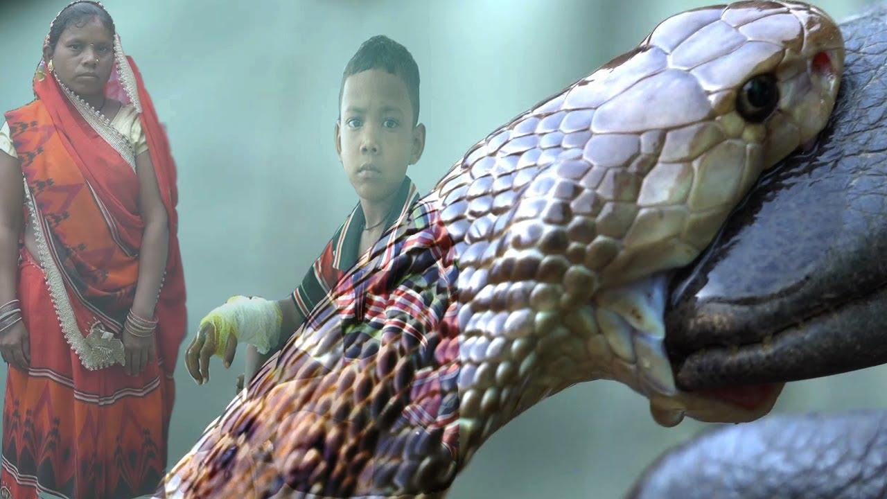 6 साल के बच्चे को जब कोबरा ने काटा माँ ने अपनी परवह किये बिना बचाई अपने बच्चे की जान|Cobra,Snake,CG
