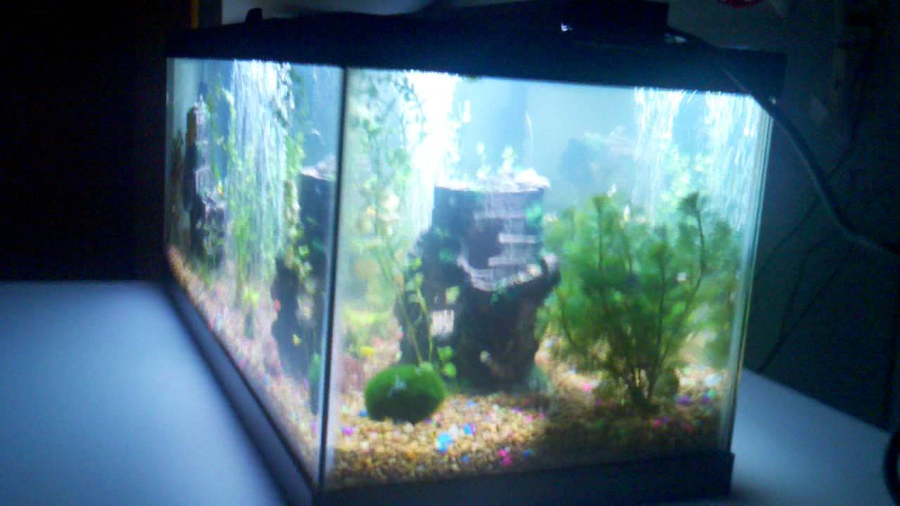 20 gallon long aquarium fish tank live plants for Youtube fish tank