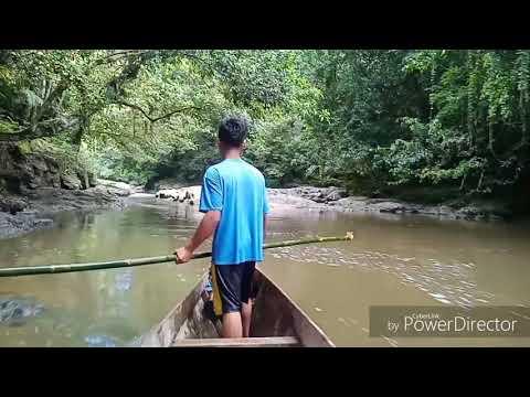 Misionaris MSF dan Rekan Muda MSF menyusuri Hulu Sungai Pungit Paroki St. Carolus  Sekatak