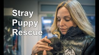 I RESCUED PUPPIES SET TO FREEZE TO DEATH IN THE SNOW!