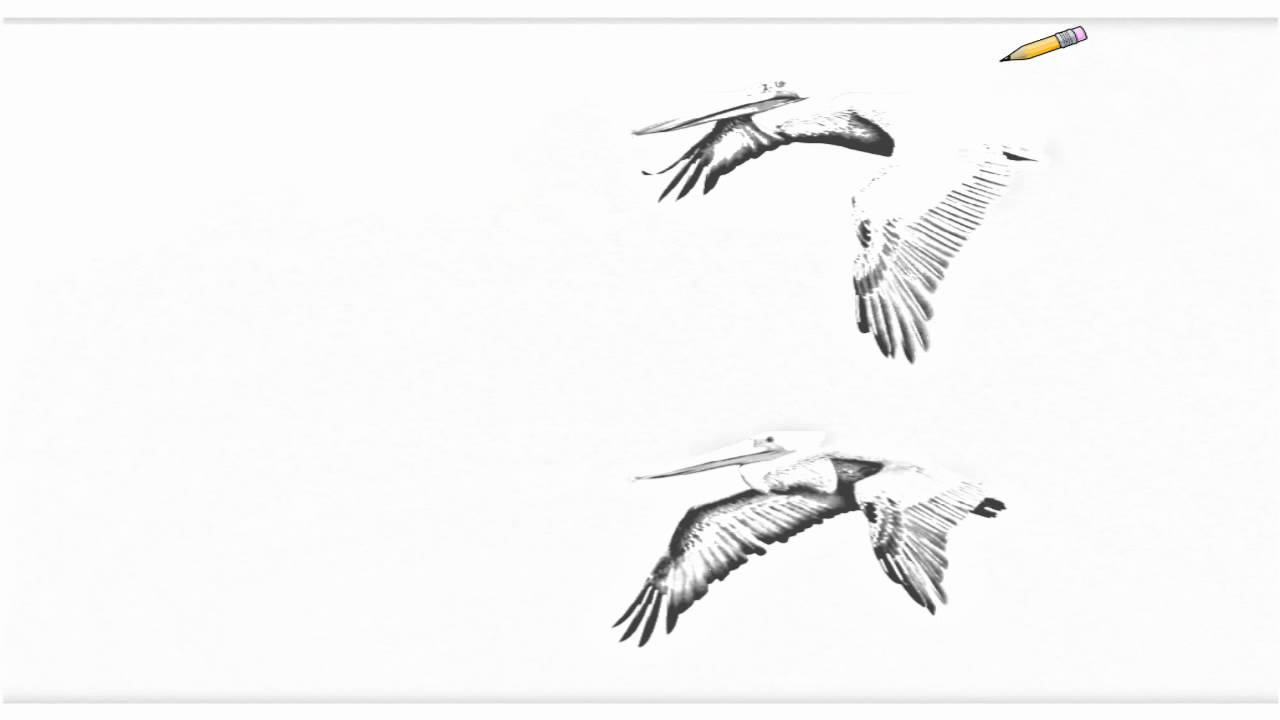 Auto Draw 2: Brown Pelicans In Flight, Carmel, California