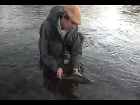 Patagonia Brown trout landed by John Burrell