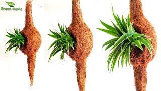 vuclip Hand Made Engineer Bird Nest Planter   Baya weaver Nest Planter   DIY Planter Idea//GREEN PLANTS