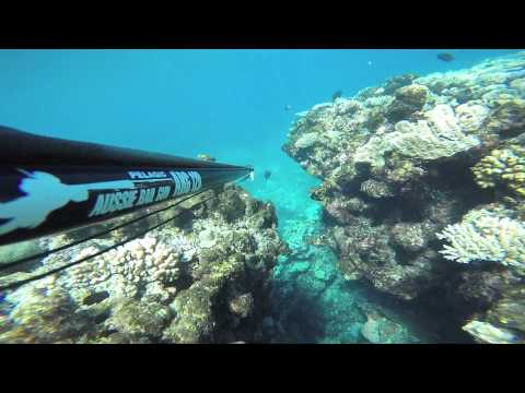 Spearfishing Townsville
