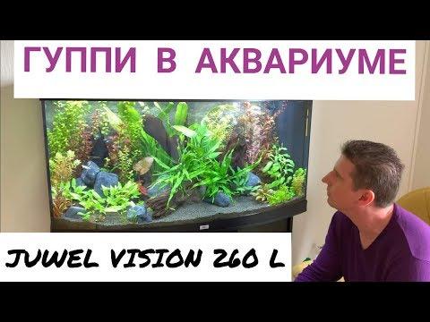 Гуппи в аквариуме. Одна из самых красивых рыбок. Аквариум Juwel Vision 260 л. Выпуск 11.