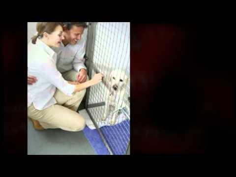Urgence vétérinaire Genève