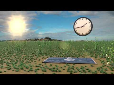 SAWBO - Postharvest Loss: Salt Testing for Grain Moisture Levels (3D)