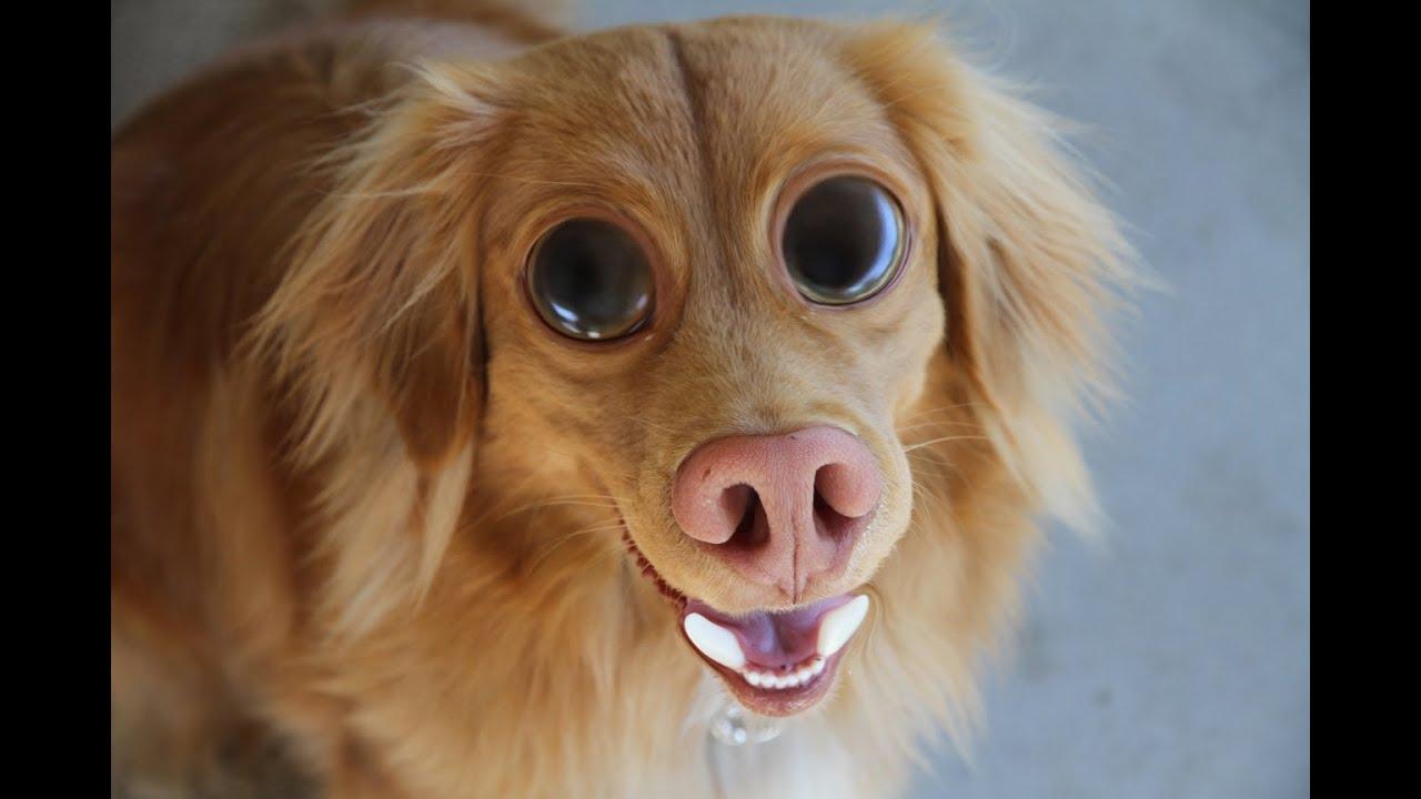 Dog Human Photoshop
