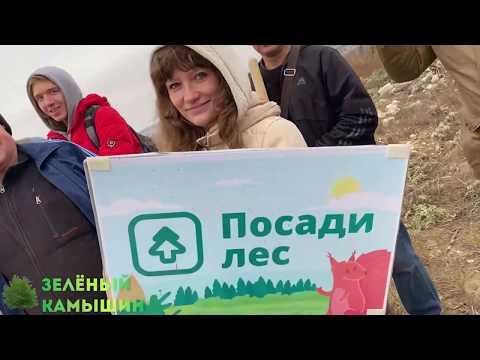 Зелёный Камышин 2019