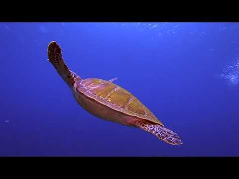 Philippines Apo Island Highlights Paul Ranky 4K UHD H264 Video
