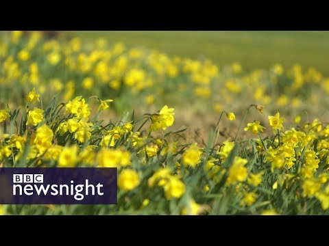 How Cornwall is preparing for Brexit - BBC Newsnight