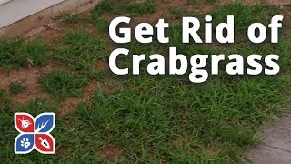 Do My Own Lawn Care - How to Get Rid of Crabgrass