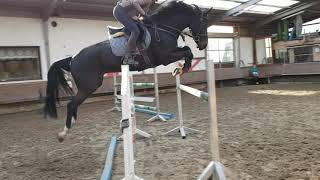 2012 Zangersheide gelding  Top Level prospect for the GP's or high AOJR FOR SALE thumbnail