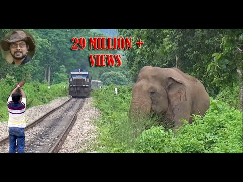 Asim Trying To Stop The Train To Save Elephant.