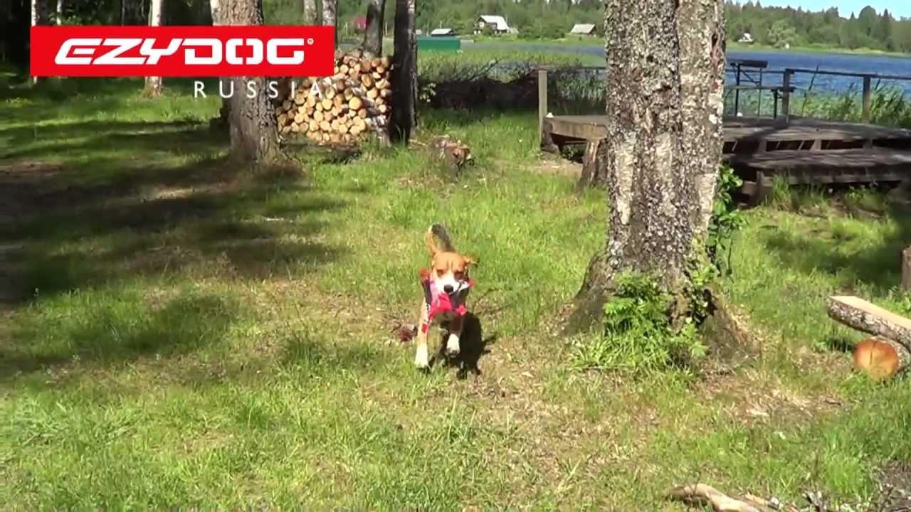 EzyDog | летающая тарелка DogStar