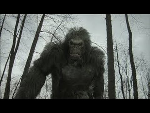 a history of big foot yeti and sasquatch Bigfoot, sasquatch and the yeti on film - author dave coleman interviewed by horrorpedia on 22 february, 2013 • ( 1 ) dave coleman is the world's foremost expert on that most misunderstood of sub-genres, the bigfoot film.