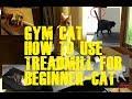 WHOAAA BEGINNER CATS USING TREADMILL