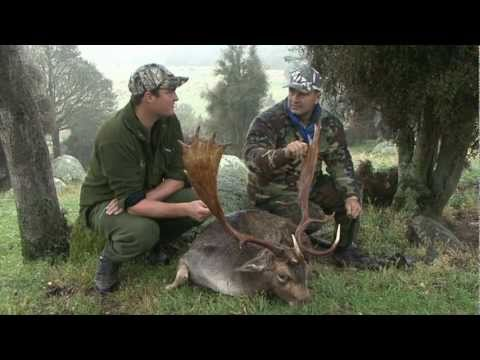 Fallow Hunt With Wilderness Trophy Hunting New Zealand