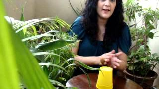 Gambar cover The Cup Song - Cover by Taruna Shroff (Anna Kendrick; Movie - Pitch Perfect)