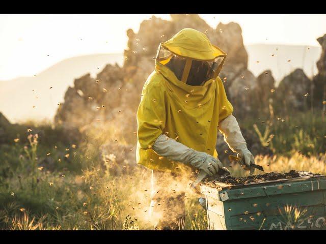 Campaña 'Apadrina una colmena' y ayuda a salvar las abejas