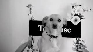 Toulouse Grande - Directed by Ariana Grande