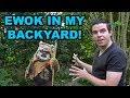 YouTube Turbo Ewok in my backyard