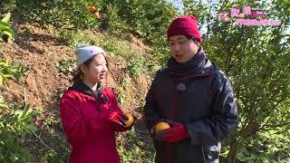 愛の葉ガールズが西予市の農業や漁業で活躍する方とコミュニケーション!今回は明浜町俵津地区から蜜柑専業農家さんをご紹介します.