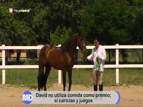 Cómo dominar a un caballo