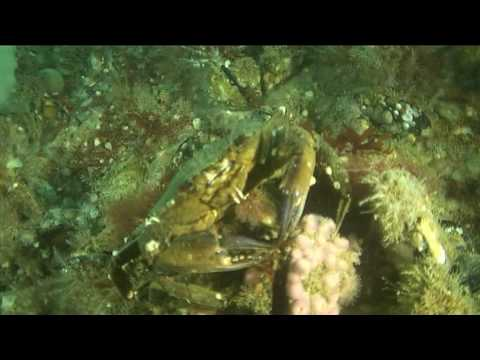 plongée rade de Brest mouillage bismark