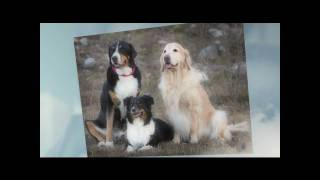 Dog Training Obedience & Boarding In San Antonio Means Pawsitive Solutions