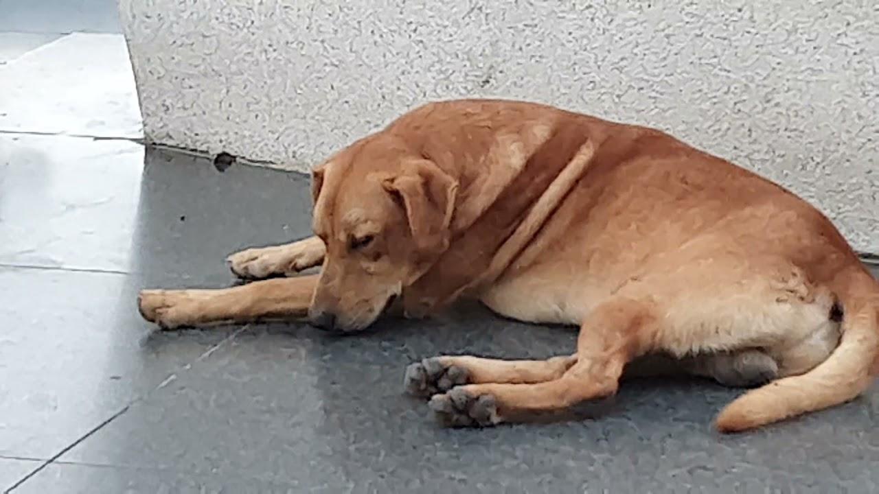 很多狗躺在地上