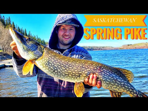 Spring Pike Tobin Lake, Saskatchewan - Day 1