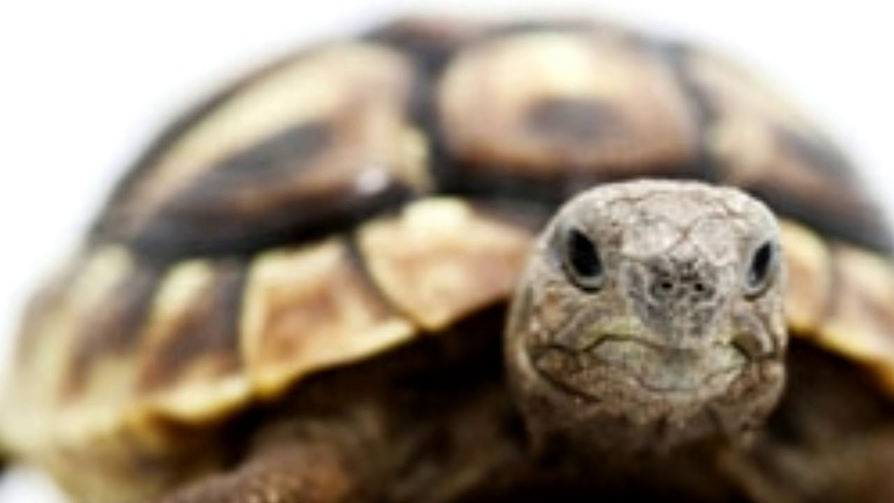 All Kinds Of Cute Different Types Of Pet Turtles Youtube