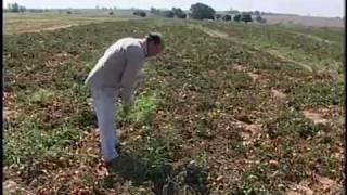 Rancharia-SP Frio/Geada - TV FRONTEIRA