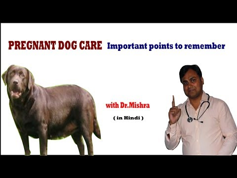 PREGNANT DOG CARE TIPS II dog and vet II Hindi