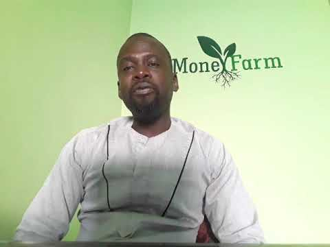Introducing Money Farm - The Gambia