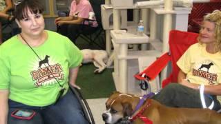 Alamo Chapter Austin Boxer Rescue Adoption Event At Petco 02 11 2012