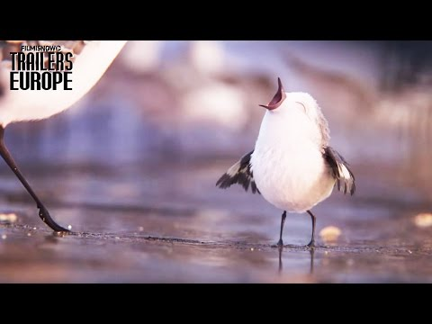 Buscando a Dory: Vine PIPER el pequeño pájaro aventurero de Pixar!