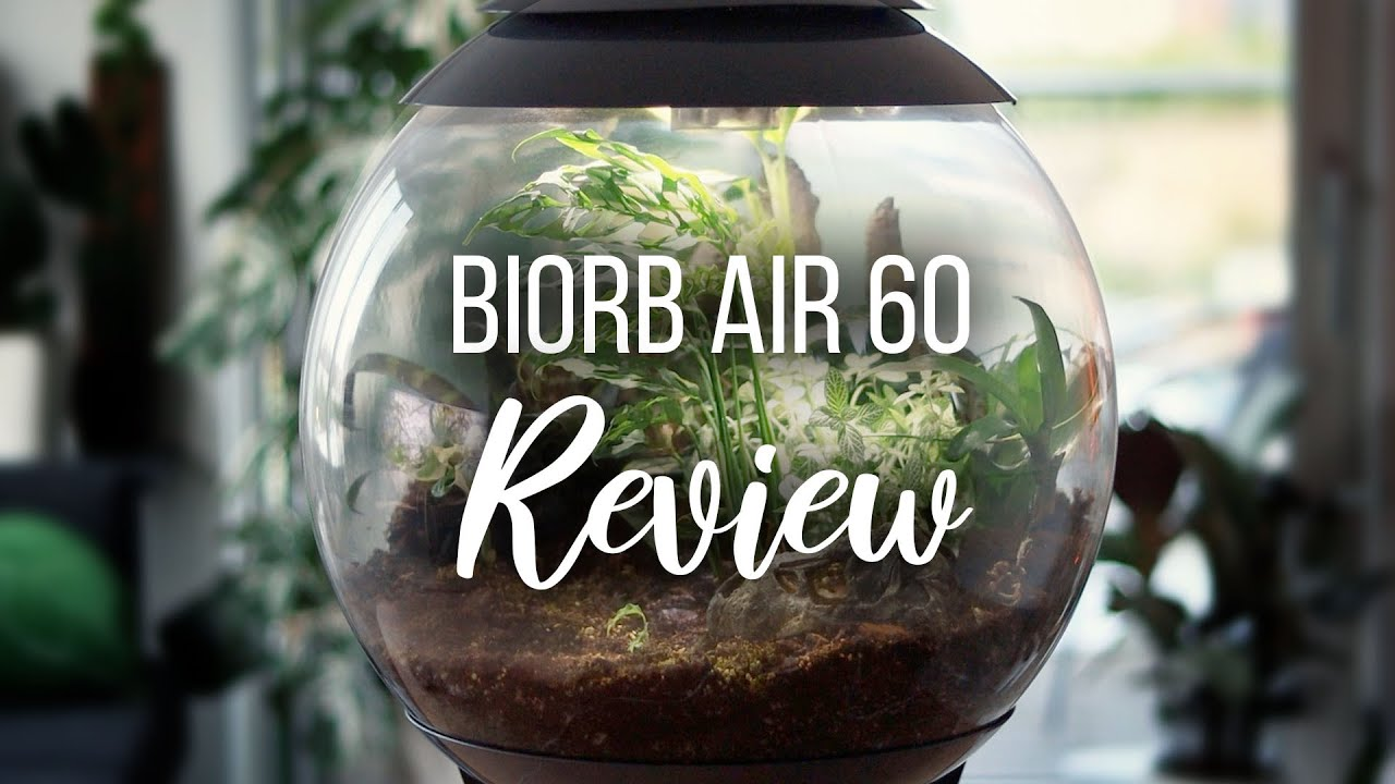 Watch this before buying a BiOrb Air | Biorb Air 60 Terrarium Review